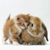 rabbit_cat_orange_3