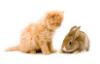 rabbit_cat_orange_4