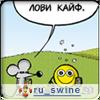 ru_swine