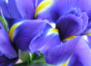 lavochka_iris userpic