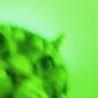 greencaa