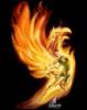 phoenix_yin