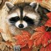 autumncoon