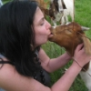 French kissing a goat.
