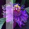 purple flower glass blur blurry
