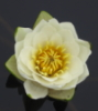 wikiorg userpic