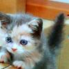 Carrie: Adorable Kitten