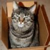 catinthebox userpic