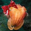 cuttlefish, lolita, cuddles