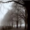 stock: black and white tree scene