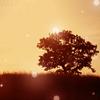 Lens Flare Tree