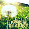 dandylion - frolic in the grass