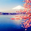 Rndm // Japan; follow the sakura