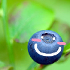 blueberryshero