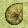 noble_ammonite userpic