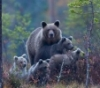 dad_bear