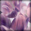 lilac_ribbon userpic