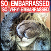 Darkamber: cat embarrassed