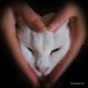 белая кошка, спабек, бездомные