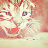 Kitty rawr.