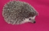 pricklyprickly userpic