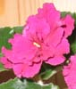 flora_violets userpic