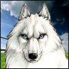 White Wolf (Summer)