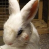 rabbitwhole00 userpic