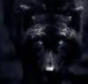 blackwolf111996 userpic