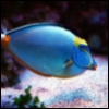 mysuperfish userpic