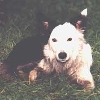 flossdog userpic