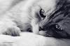 sonrisa_tierna userpic