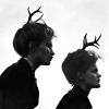 oh my little deers