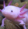 fishtetris