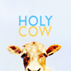 Animals | Holy Cow