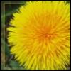 yellowblaster userpic