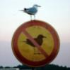 birdofluck