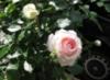 ma_ru_sen_ka userpic