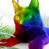 rainbow jc
