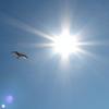 птица, солнце, Алексей Донской, Alek, Alexey Donskoy