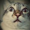 omg_cat
