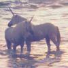 ocean soul: stock: unicorns