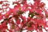 dogwood_blossom userpic