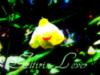 alfirin_lover userpic