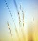 небо и поле