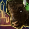 This Bison Be Jammin': Kickin' it Prairie Style