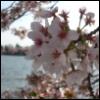 tulips90 userpic