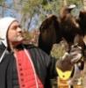 Balingup w Eagle