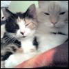 [Katiroth]: RL: Katana and Reno: Cuuuute