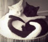 icon personal_cats_b&w